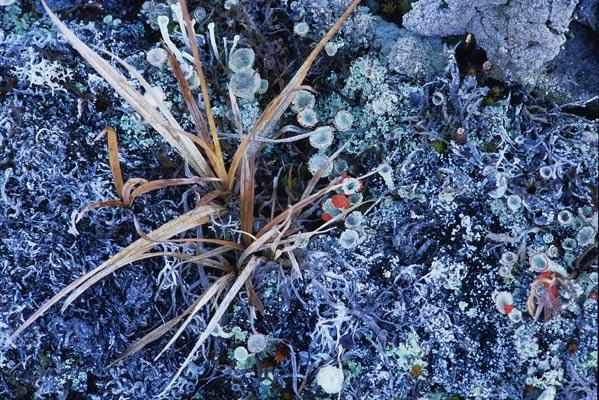 足元には地衣類が大地を埋め尽くしていて、中には鮮やかなオレンジ色のものも目立つ地面を写した写真