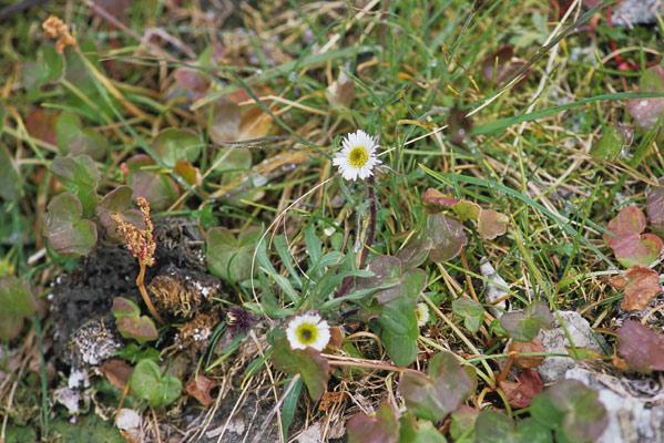 クマのフンの横にはまだ何種類かの花が残っていて、クマの糞と花を1つの写真に収めた