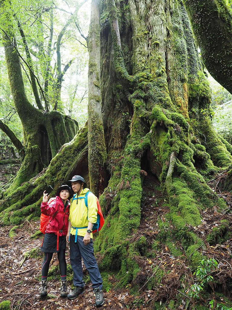 今回は縄文杉を止めて大和杉にします!縄文杉は次回に泊まりでまた来ますね!