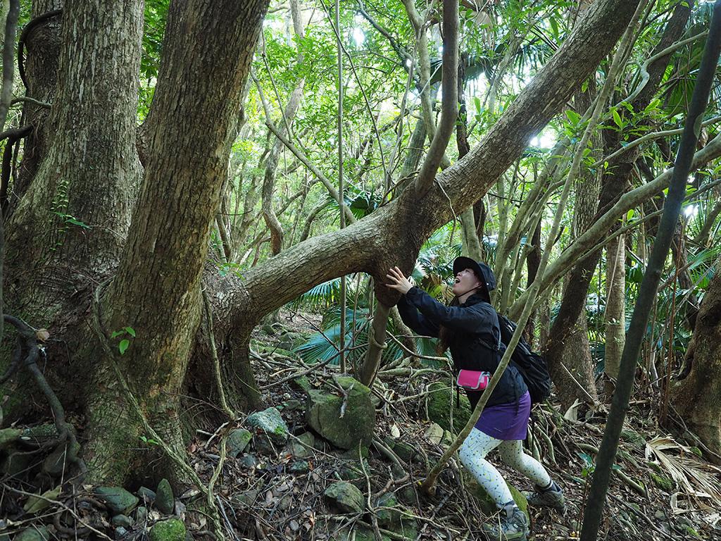 木が他の木を幹の途中で取り込んでいて、それがまるでホットドッグのようになっていたので、参加者のMさんが食べる真似をしている写真