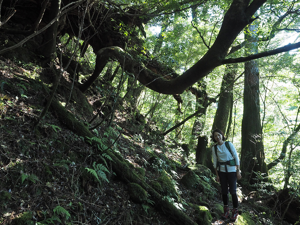 はじめての屋久島トレッキングが大和杉という渋さに惚れ惚れ♪