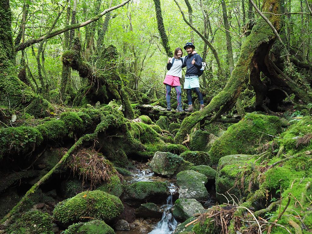 ただでさえ画になる苔の森が、更にお二人で引き立てられている写真