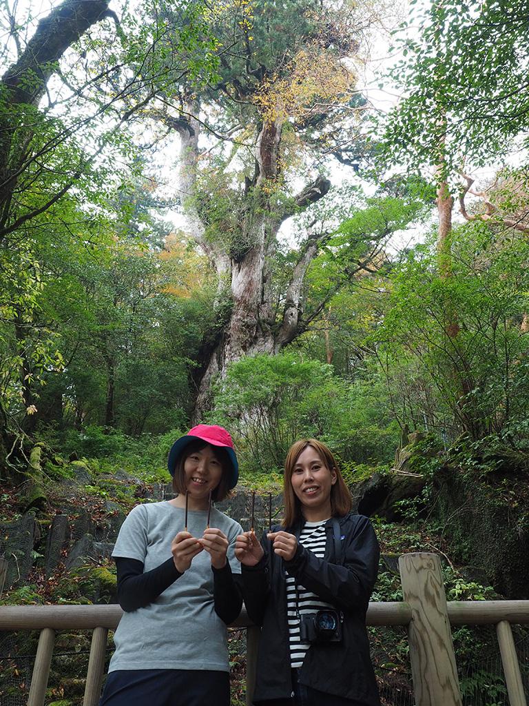 11月11日はポッキーの日なので、縄文杉の前でポッキを2本ずつ持ってポーズをとる参加者2人の写真