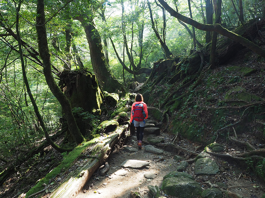 斜めから差し込む美しい陽射し降り注ぐ森を奥へと歩いて行くAさんの後ろ姿