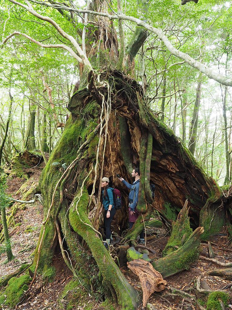 折れた巨木の中に入ってその大きさを実感する2人の写真