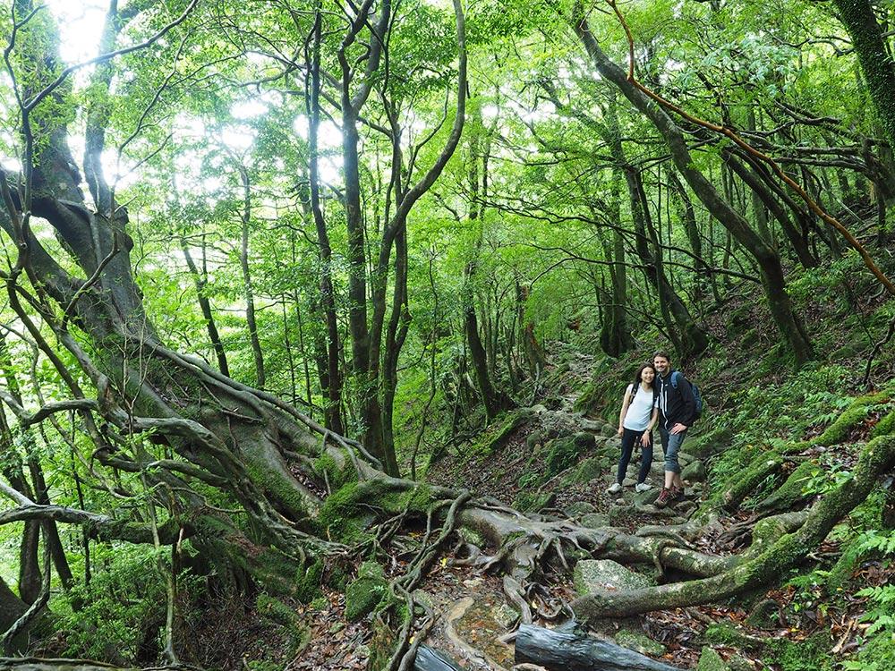 先程まで降っていた雨が止み、深い緑の森の中、渋い楠川歩道に立つ二人の写真