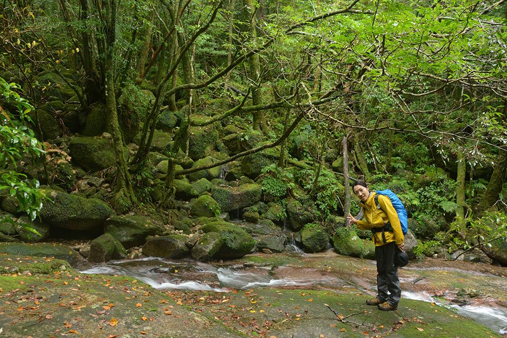 雨の日ならではの「艶」がある森をバックに撮ったMさんの写真