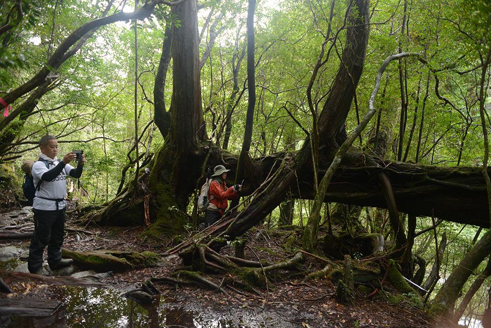 複雑怪奇に根を張り巡らせるスギとヒノキに夢中になる参加者2人の写真