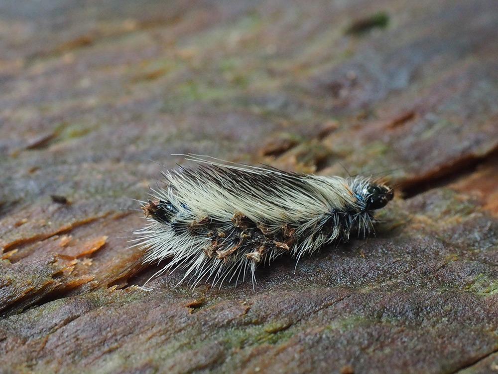 テントを食い破っていた毛虫の写真