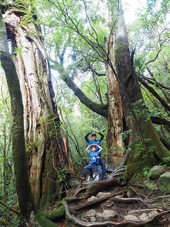 2本の巨木に挟まれて、タケノコみたいなポーズをとるお父さんとお子さんの写真