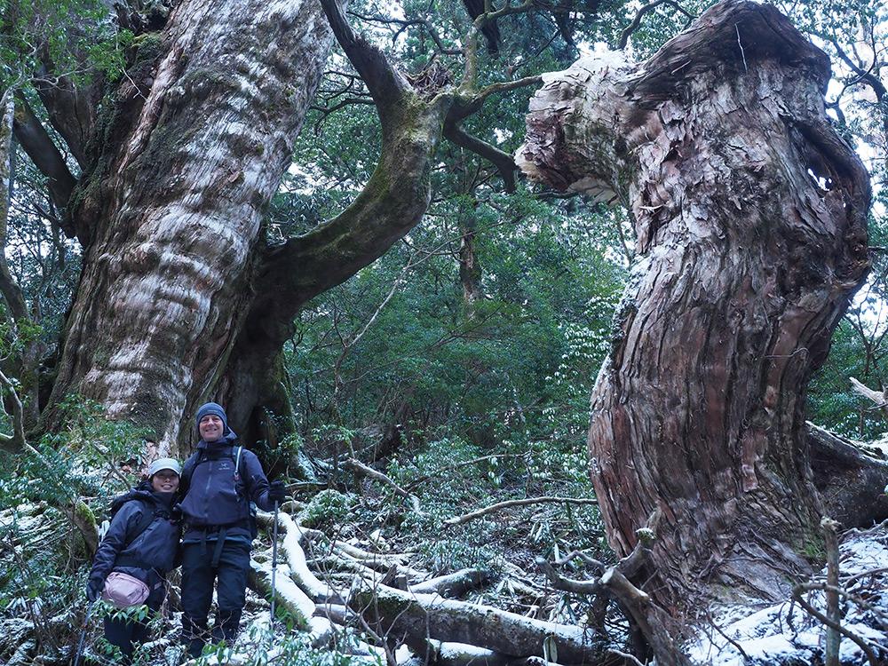 屋久杉の巨木と、折れた巨大な枝を横に撮った二人の写真