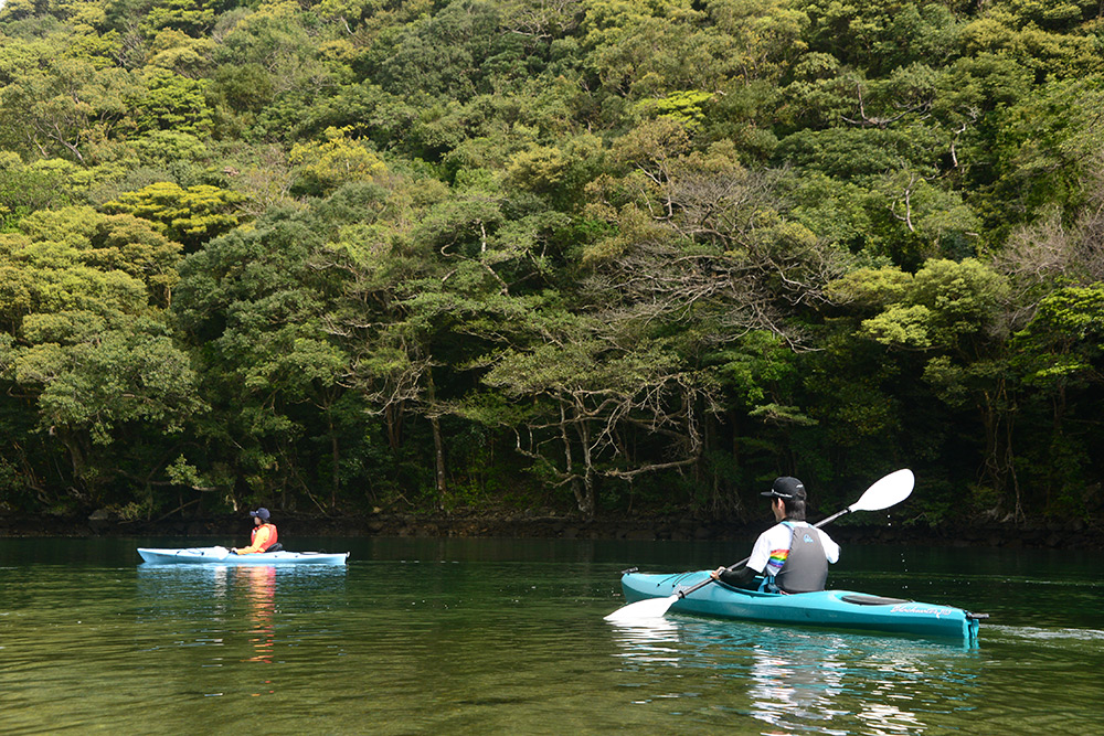 新緑が出始めた安房川をカヤックで漕ぎ進む二人の写真
