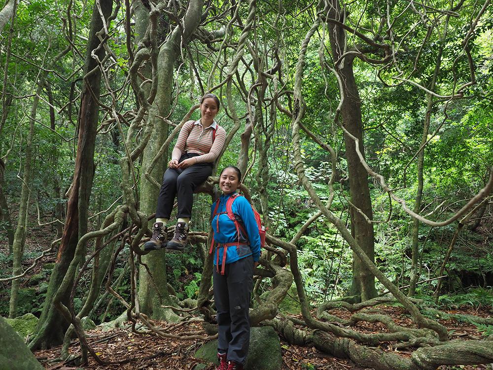 沖縄から来て屋久島の照葉樹林と比べながら満喫してみた