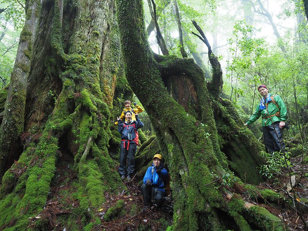 久しぶりの家族旅行に、屋久島の大和杉を選んで託してみました