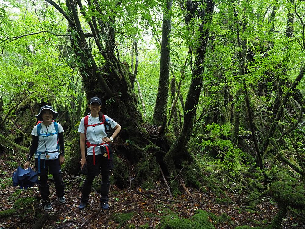 薄暗い森の中で杉の切り株をバックに撮った写真