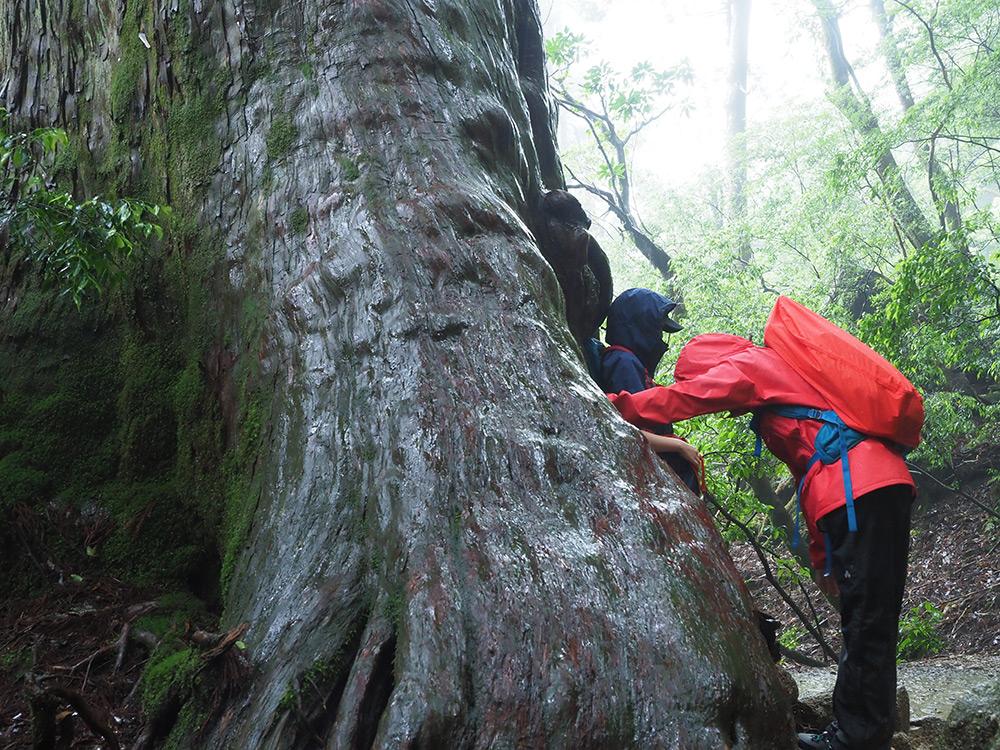 連休の混雑を避けてずらした縄文杉は静かで正解でした!
